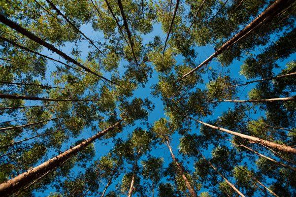 Casa de Madeira Pinus Autoclave